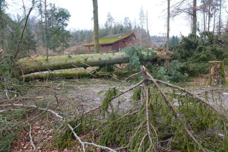 Umgefallene Bäume: Burglind wütete im Wald
